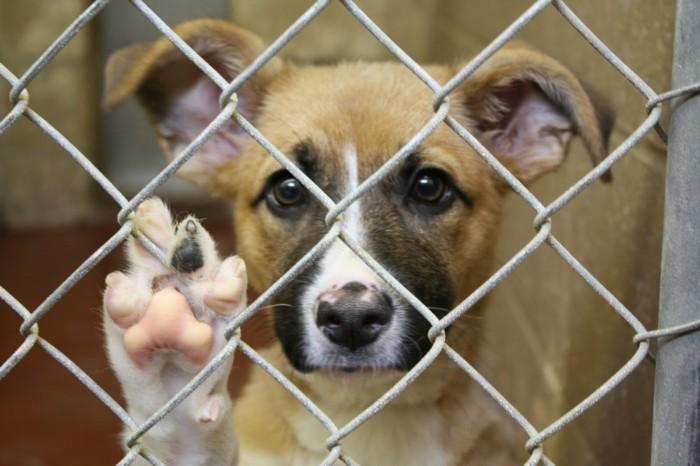 sauver-animaux-chez-soi-maison-choses-a-faire-avant-de-mourir