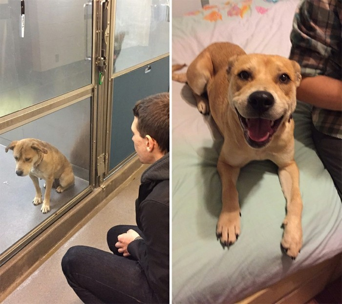 sauver-animaux-prenez-animal-domestiques-Give-a-Shelter-Pet-a-Home
