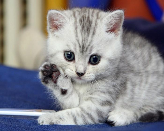 sauver-chaton-mingon-prendre-un-animaux-à-la-maison-choses-a-faire-avant-de-mourir