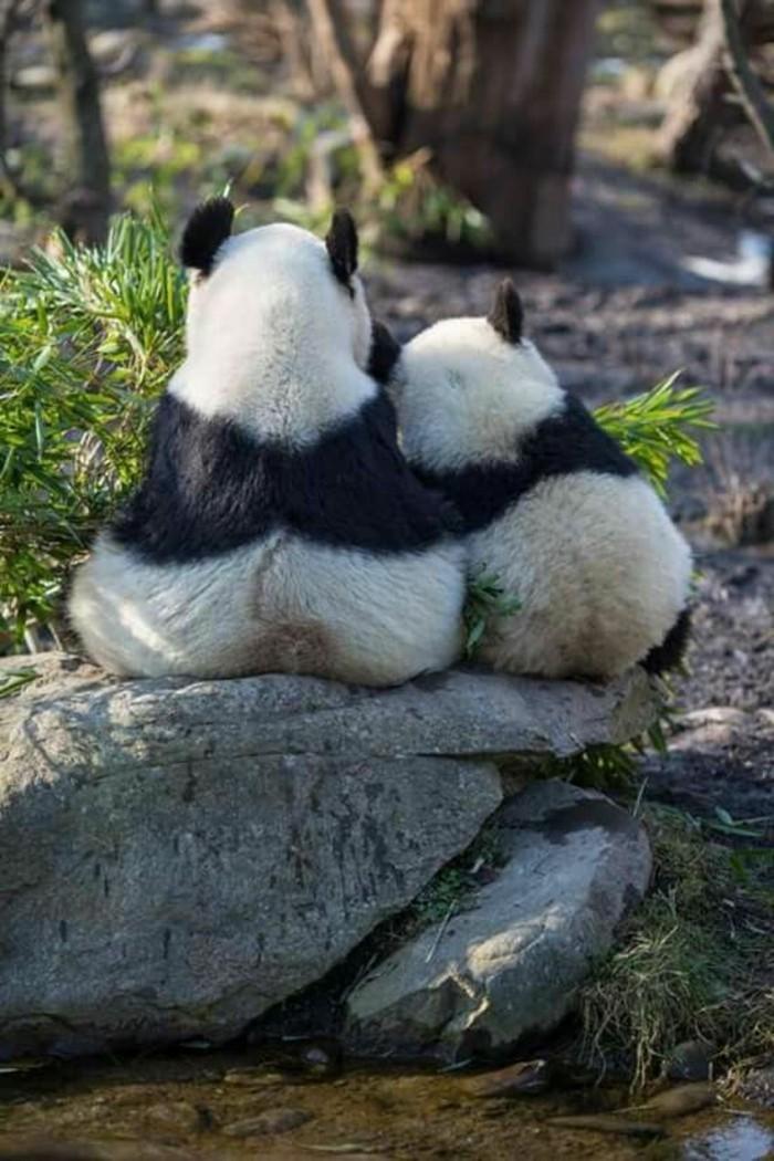 stickers-panda-chambre-bébé-embrasse-deux-amis