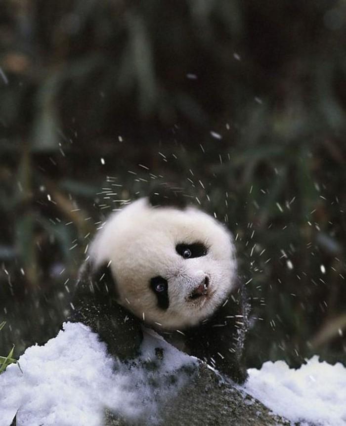 stickers-panda-chambre-bébé-embrasse-neige-blanche-et-noir