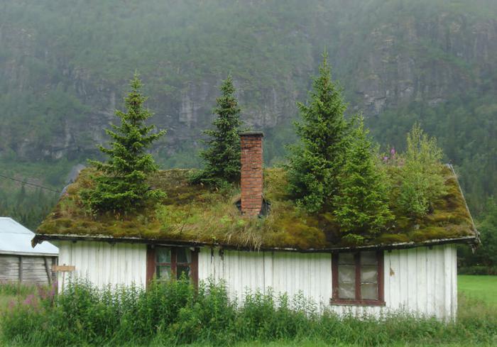 toiture-végétalisée-ancienne-maison-avec-des-pins-sur-sa-toiture