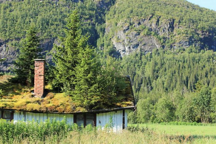toiture-végétalisée-arbres-sur-le-toit-d'une-maison-Norvège