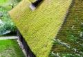La toiture végétalisée – une mode aujourd'hui, une tradition depuis des siècles