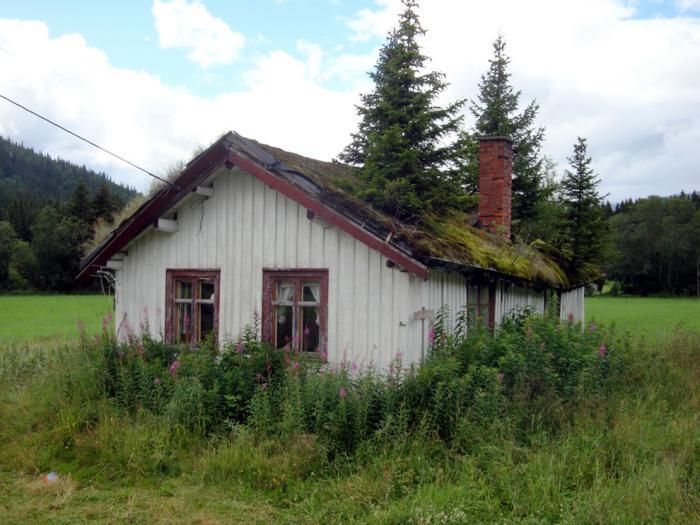 toiture-végétalisée-maison-abandonné-toiture-végétale