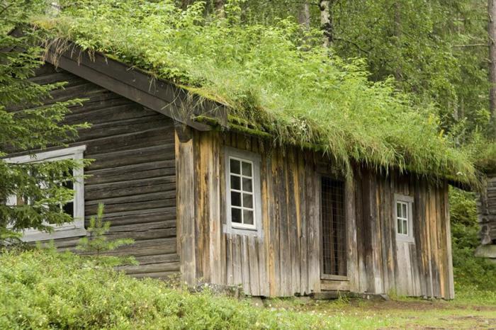 toiture-végétalisée-maisonette-en-bois-avec-toit-vert