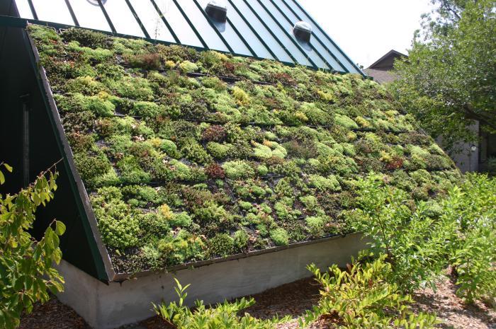 toiture-végétalisée-originale-réaliser-sa-toiture-végétalisée