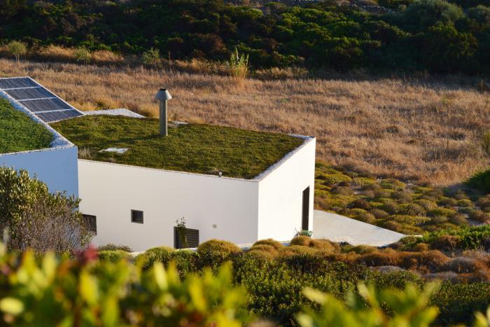 toiture-végétalisée-toiture-verte-minimaliste