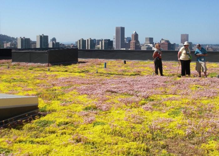 toiture-végétalisée-toiture-verte-urbaine-Portland