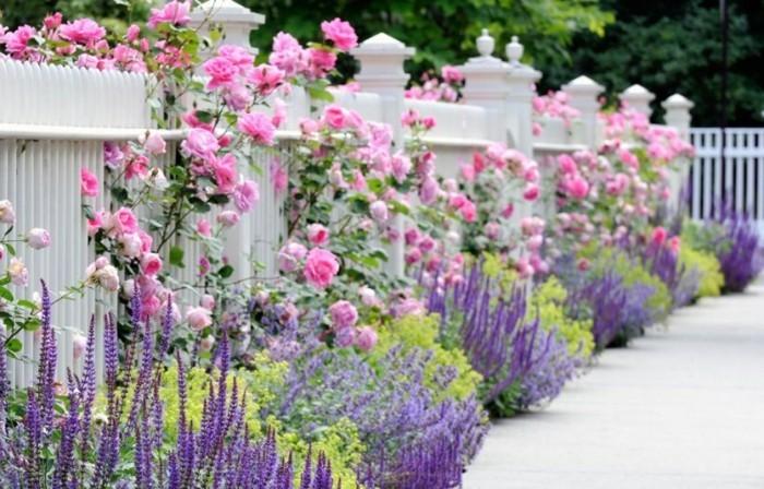 admirable-jardin-aménager-son-jardin-agencer-son-jardin