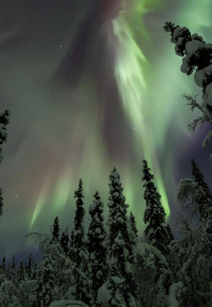 aurores-boréales-aurore-boréale-vue-dans-la-foret