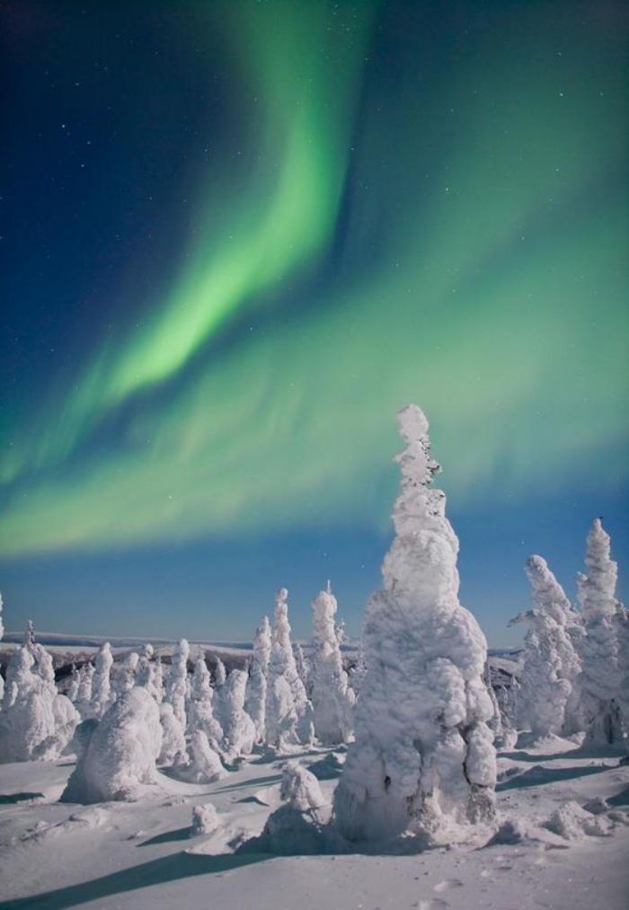 aurores-boréales-Alaska-foret-et-lumières-vertes-dans-le-ciel