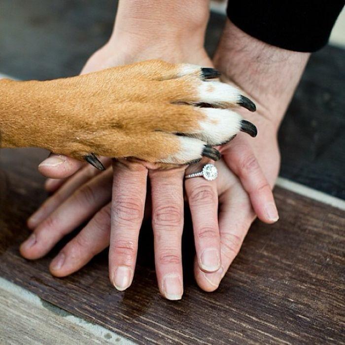 cool-idée-comment-annoncer-votre-mariage-le-chien