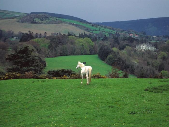 fantastiqueidée-visiter-l-irlande-en-voiture-cheval-blanc