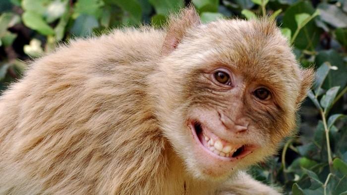 garder-le-sourire-citation-sur-le-sourire