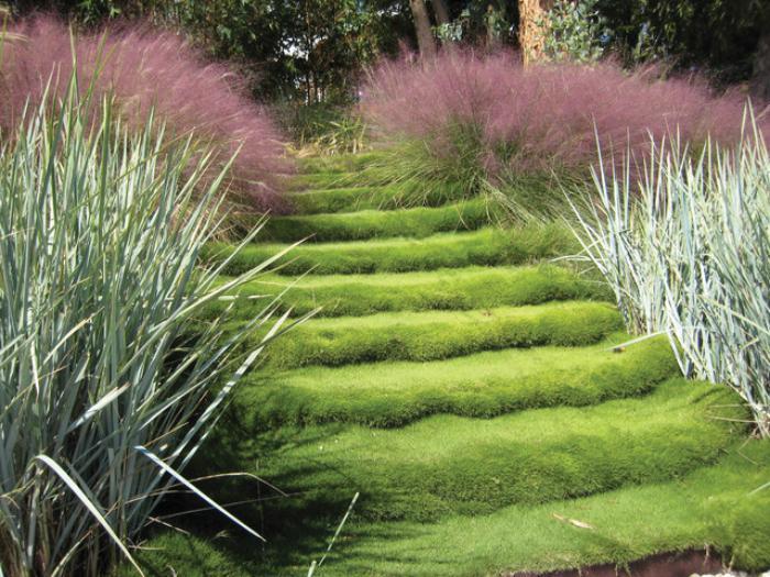 jardin-en-pente-jardin-original-escalier-caché-sous-la-mousse-verte
