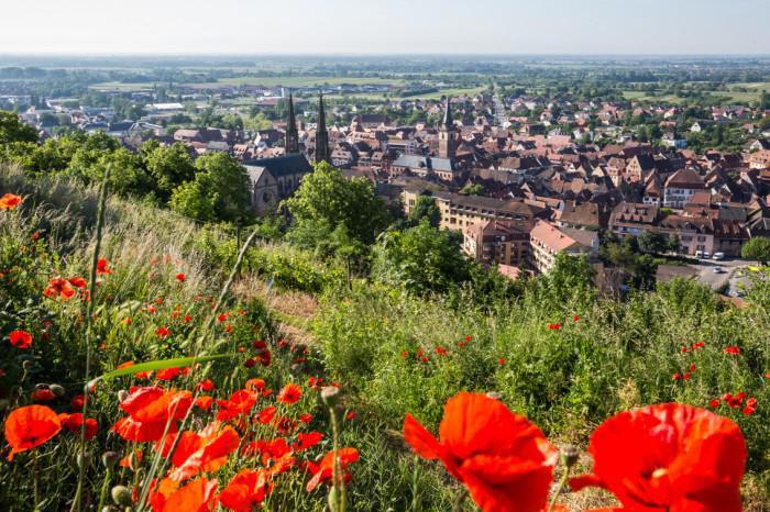 la-route-des-vins-d'Alsace-joli-paysage-de-printemps
