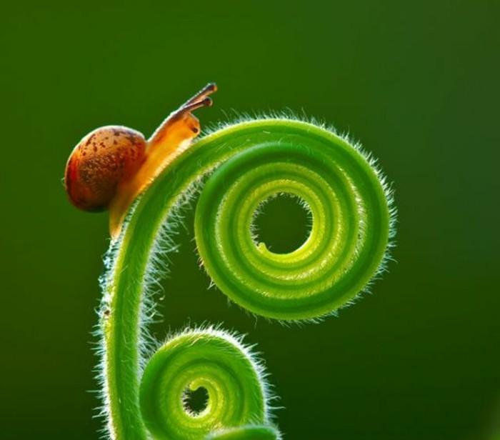 la-suite-de-Fibonacci-plante-verte-petit-escargot-resized