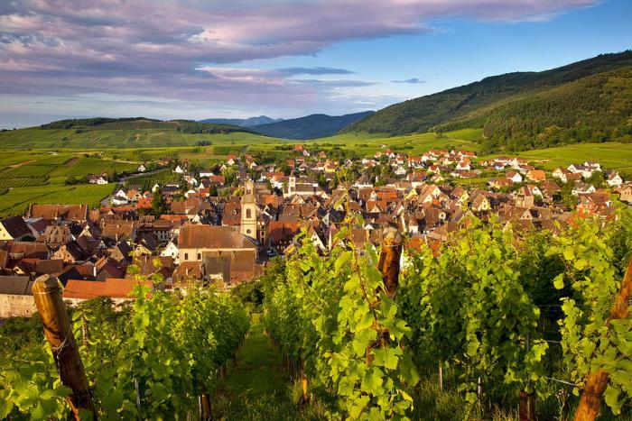 la-route-des-vins-d'Alsace-paysage-paradisiaque
