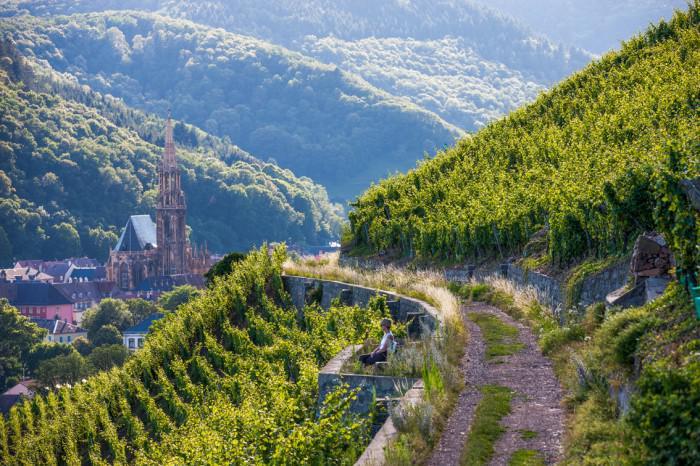 route-des-vins-d'Alsace-entre-montagnes-et-vignobles