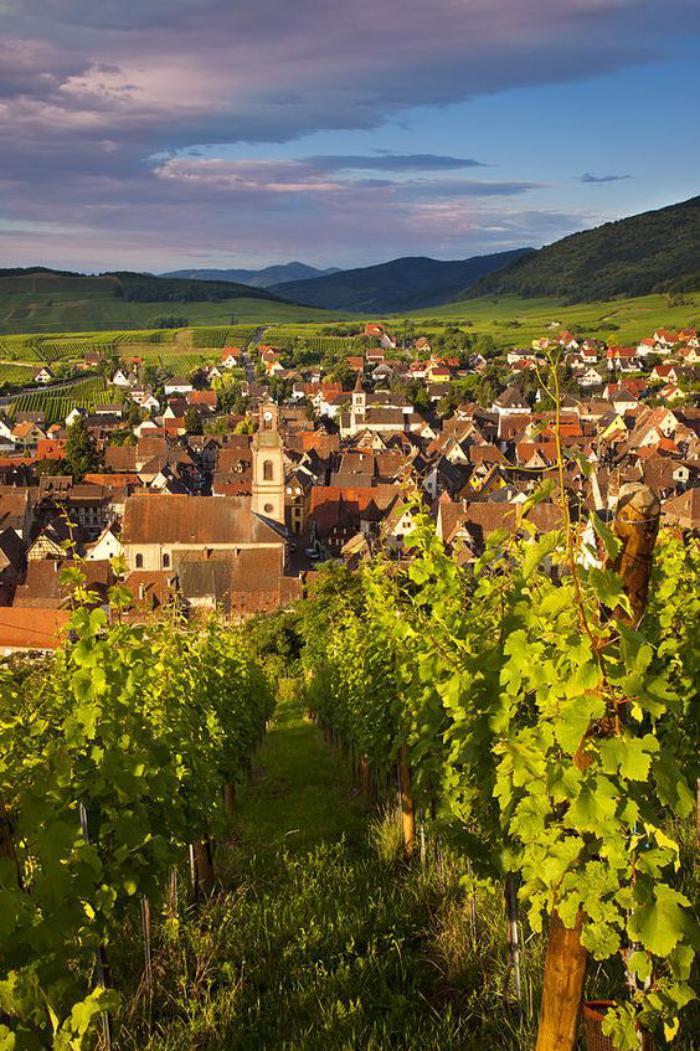 route-des-vins-d'Alsace-paysage-typique-d'Alsace