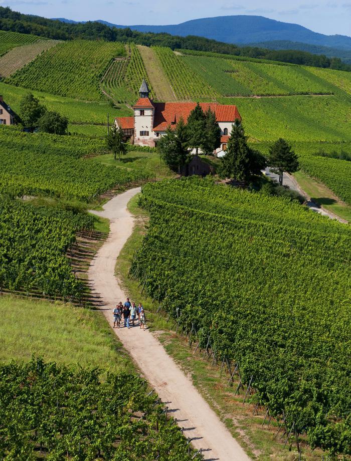 route-des-vins-d'Alsace-route-dans-les-vignobles