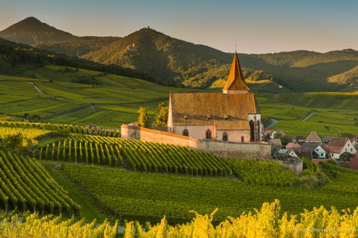 route-des-vins-d'Alsace-un-paradis-sur-terre