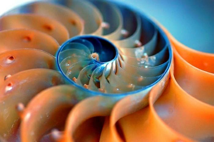 suite-de-Fibonacci-algorithme-avec-l'expansion-le-nombre-grandit-resized