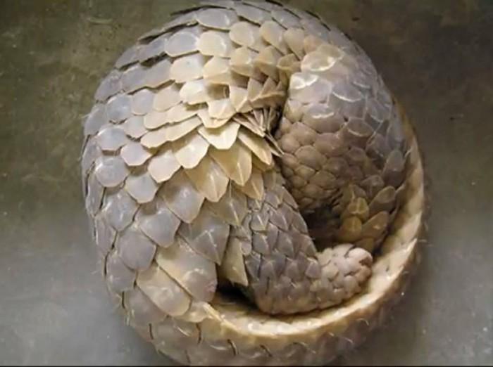 suite-de-Fibonacci-animal-dans-la-nature-resized
