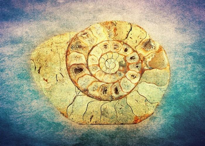 suite-de-Fibonacci-coquillage-jaune-resized