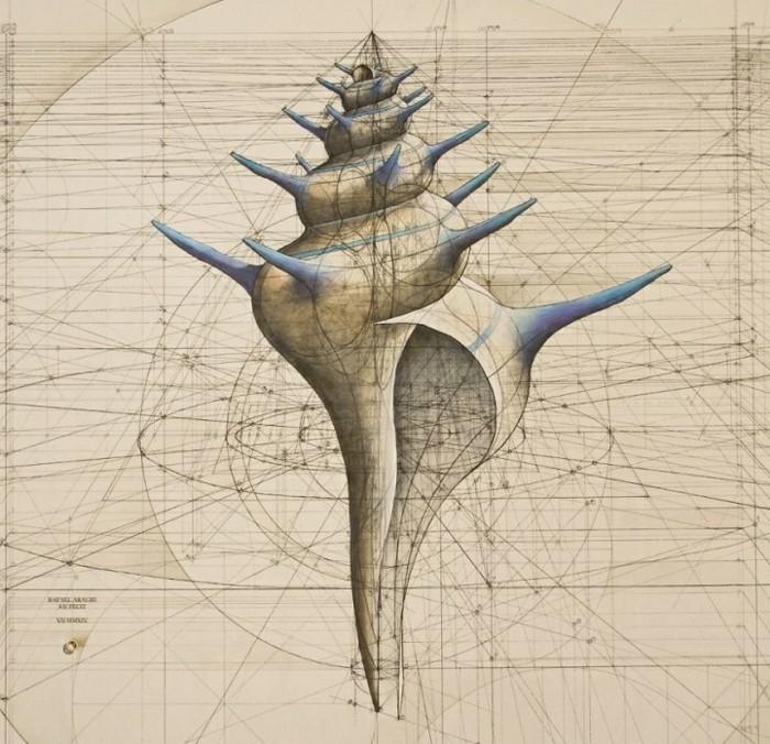 suite-de-Fibonacci-coquillage-long-s'-elargissant-resized