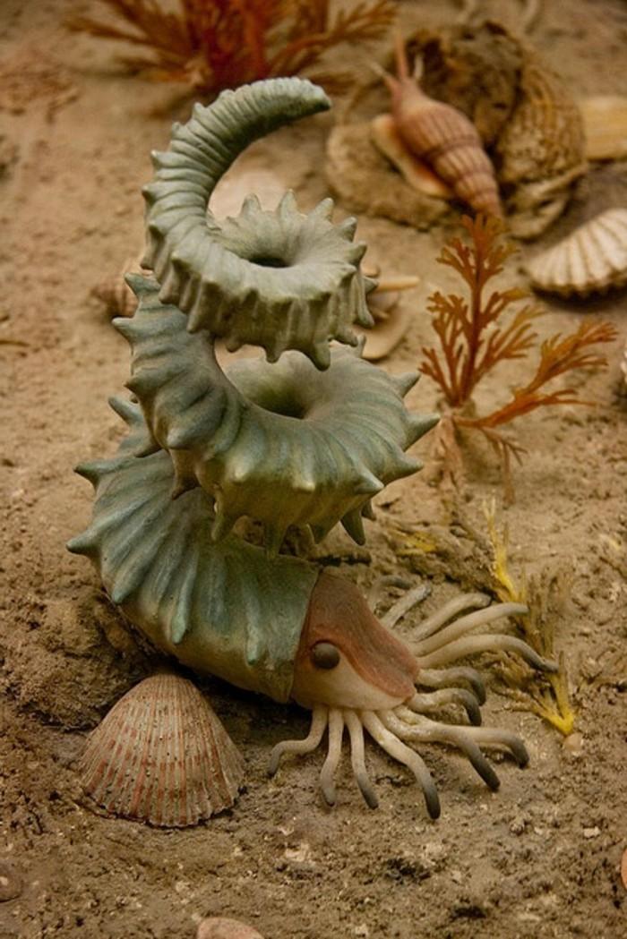suite-de-Fibonacci-dans-la-nature-crustace-fond-de-mer-resized