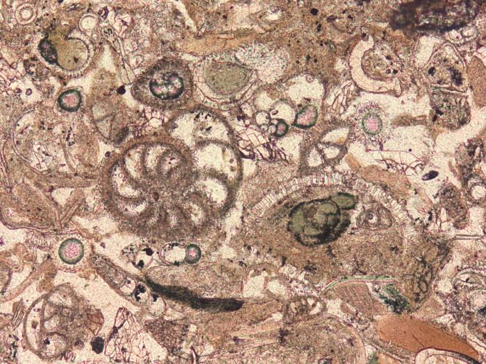 suite-de-Fibonacci-dessin-prahistorique-resized