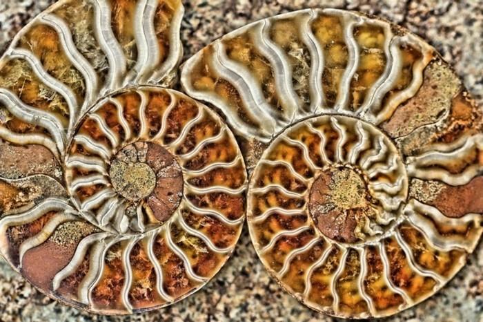 suite-de-Fibonacci-deux-spirales-en-marron-et-blanc-resized