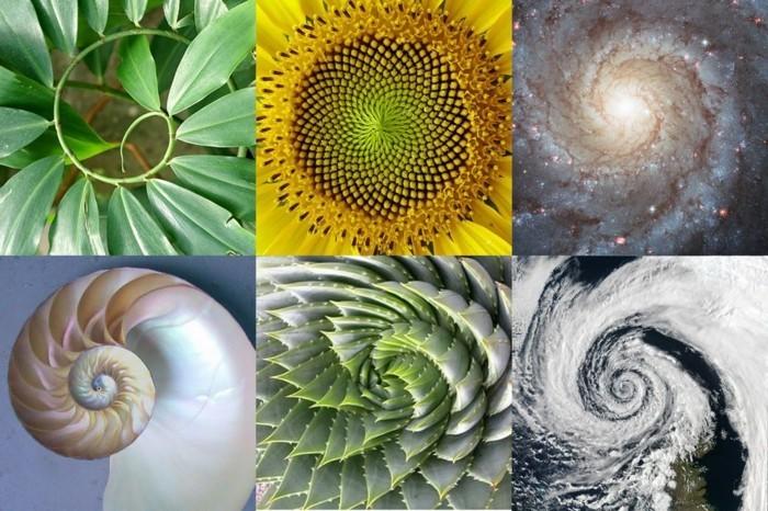 """Résultat de recherche d'images pour """"spirale fibonacci nature"""""""