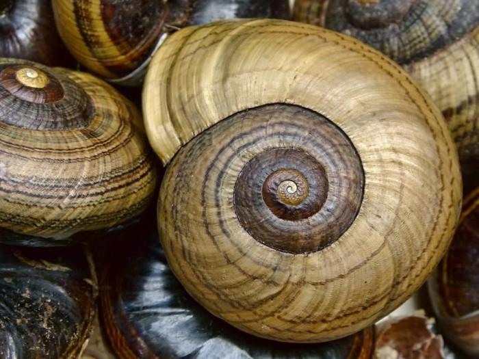 suite-de-Fibonacci-escargots-aux-couleurs-et-aux-nuances-multiples-resized