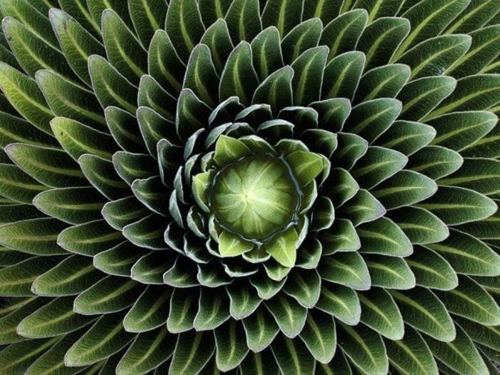 suite-de-Fibonacci-feuilles-artichoc-resized
