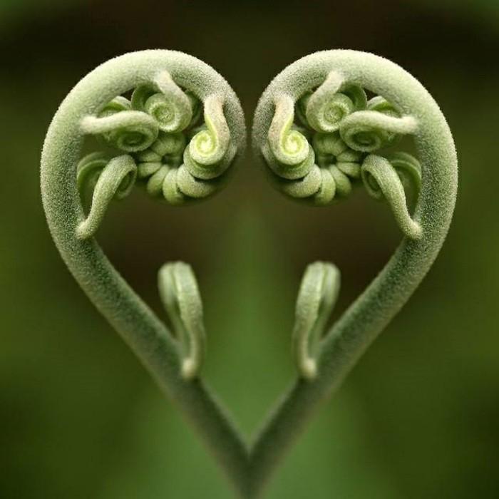 suite-de-Fibonacci-la-nature-est-magique-resized