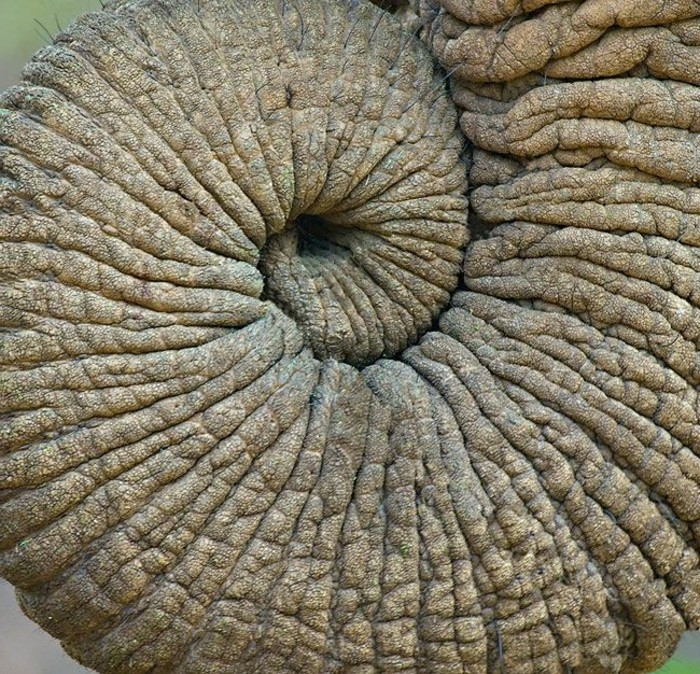 suite-de-Fibonacci-la-trombe-d'-un-elephant-resized