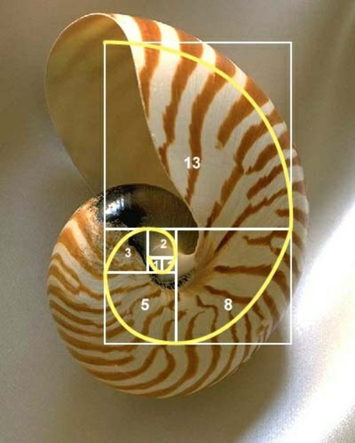 suite-de-Fibonacci-nombre-d'or-chiffres-en-sequence-resized