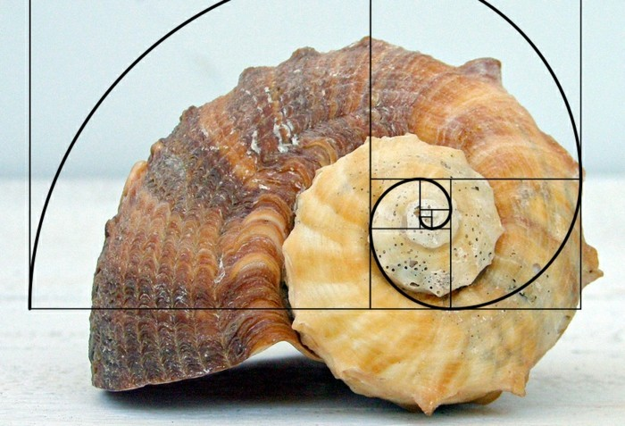 suite-de-Fibonacci-nombre-d'or-dans-la-nature-resized