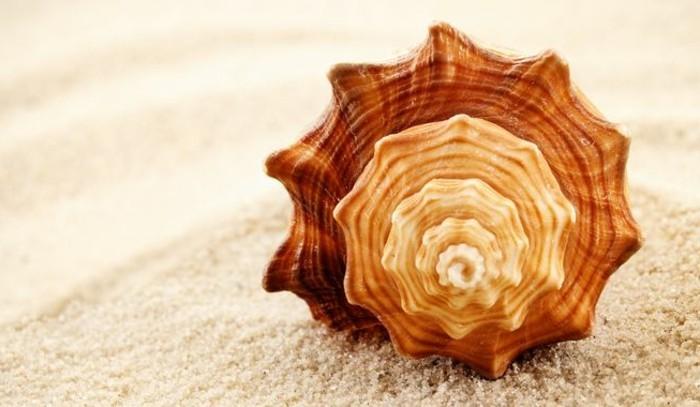suite-de-Fibonacci-nombre-d'or-et-sa-manifestation-dans-la-nature-resized
