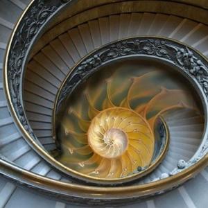 Suite de Fibonacci - en quête de la parfaite harmonie