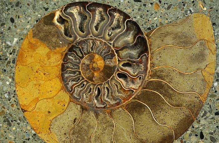 suite-de-Fibonacci-spirale-en-jaune-et-beige-resized