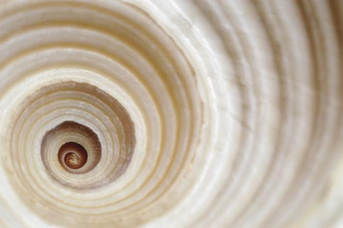suite-de-Fibonacci-spirale-mathematique-magie-resized