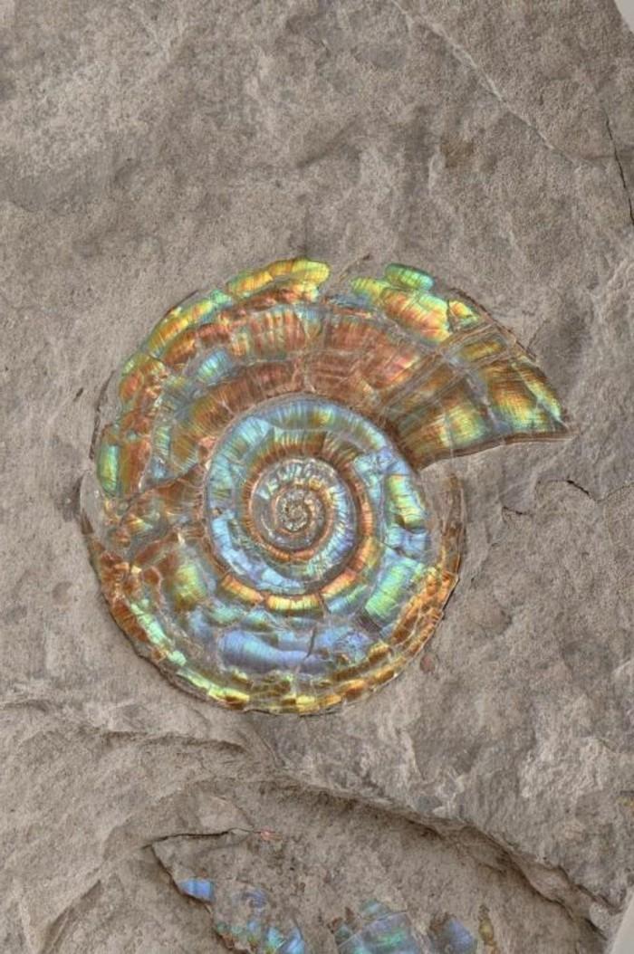 suite-de-Fibonacci-spirale-nacree-resized