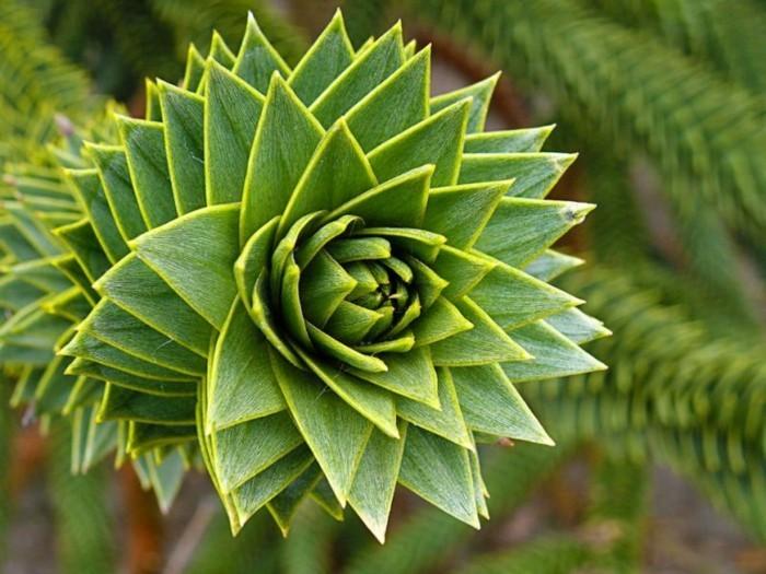suite-de-Fibonacci-vert-spirale-cactus-resized