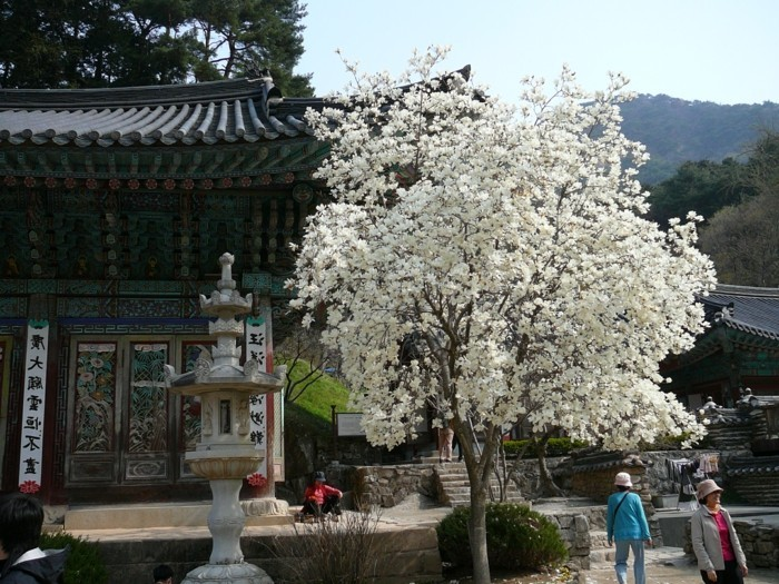 temple-bouddhiste-Gyeryongsan-parc-national-resized