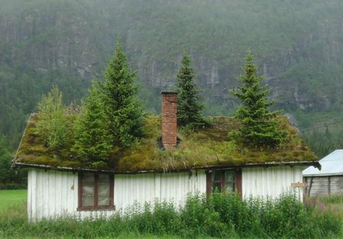20-pelouse entretien arbres sur le toit d'une maison