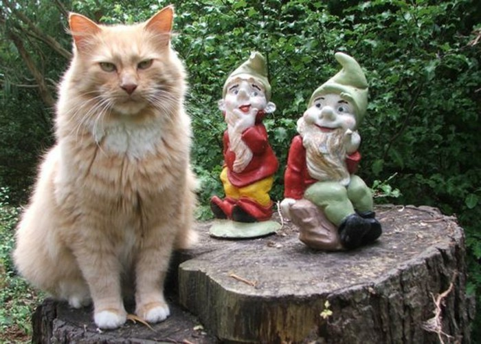 33-Les nains de jardin avec un chat